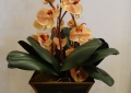 Orchid Arrangement2