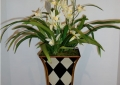 Orchid in Hand Painted Container